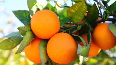 portokali kalo1